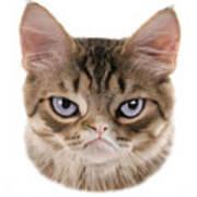 Kitten T-shirt Poster