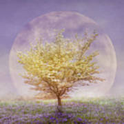 Dogwood In The Lavender Mist Poster