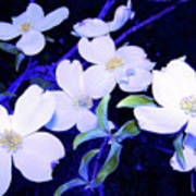 Dogwood Night Blooms Poster