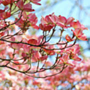 Dogwood Tree Landscape Pink Dogwood Flowers Art Poster