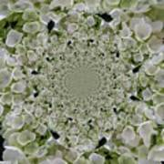 Doily Of Flowers Poster