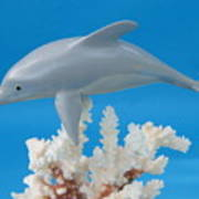 Dolphin On Coral Poster