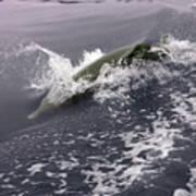 Runnin' Dolphin  Poster