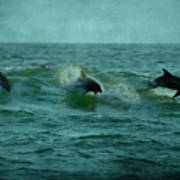 Dolphins Poster by Sandy Keeton