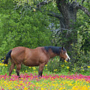 Domestic Horse In Field Of Wildflowers Poster