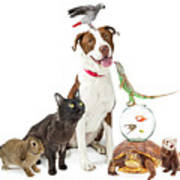 Domestic Pets Group Together With Copy Space Poster