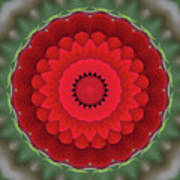 Don Juan Kaleidoscope Carnation Poster