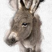 Donkey Foal No 02 Poster