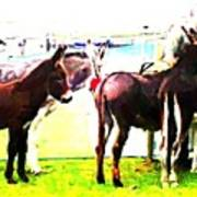 Donkeys At Mullaghmore Poster