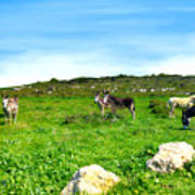 Donkeys Under A Blue Sky In Green Hills Poster