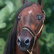 Dont Worry Saddlebred Sire Poster