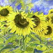 Dordogne Sunflowers Poster