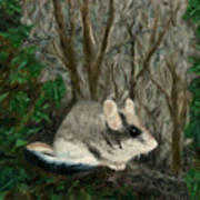 Dormouse In Ivy Poster
