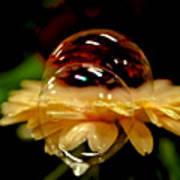 Double Bubble Flower Poster