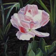 Double Sassy Tulip Poster