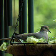 Dove Nesting, Balcony Garden, Hunter Hill, Hagerstown, Maryland, Poster