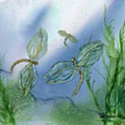Dragonflies At Dusk Poster