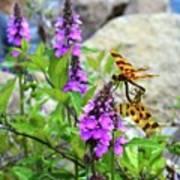Dragonflies In Summer Poster