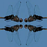 Dragonfly Composite Color Poster