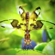Dragonfly Design Poster
