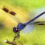Dragonfly In Blue Poster