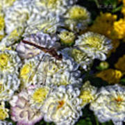 Dragonfly On White Mums Poster