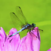 Dragonfly Resting Poster