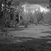 Drama In The Swamp II-black And White Poster