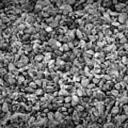 Dramatic Black And White Petals On Stones Poster