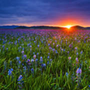 Dramatic Spring Sunrise At Camas Prairie Idaho Usa Poster