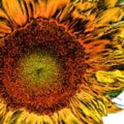 Dramatic Sunflower Poster