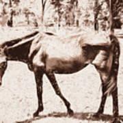 Drawn Ranch Horse Poster