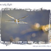 Dreams Take Flight Poster Or Card Poster