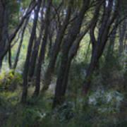 Dreamy Marjan Forest In Croatia Poster