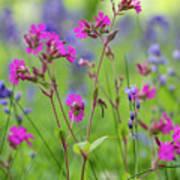 Dreamy Wildflowers Poster