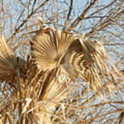 Dried Palm Fronds In The Wind Poster