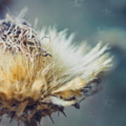 Dried Thistle Poster