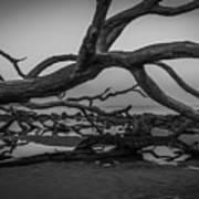 Driftwood Beach 4 Poster