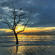 Driftwood Beach Sunrise Jekyll Island Georgia Poster