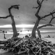 Driftwood Black And White Poster