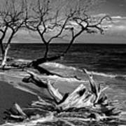 Driftwood Bw Fine Art Photography Print Poster