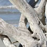 Driftwood Detail Poster