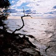 Driftwood Dragon-barnegat Bay Poster