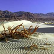 Driftwood Dune Poster