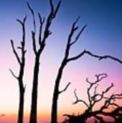 Driftwood Sunrise Poster
