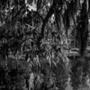 Drippin With Spanish Moss At Middleton Place Poster