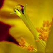 Drop On Flower Stalk Poster