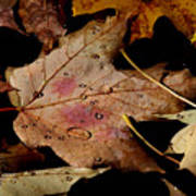 Droplets On Fallen Leaves Poster
