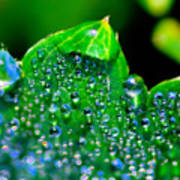 Drops On Leaf Poster