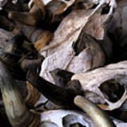 Dry As Bones Poster